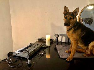 Der Geheime Salon_Hofhund2.4.3