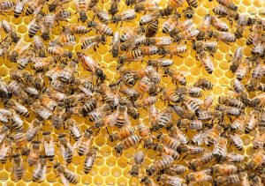 swarm-of-bees-3424406